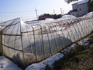 渋谷農園 ハウス 雪2