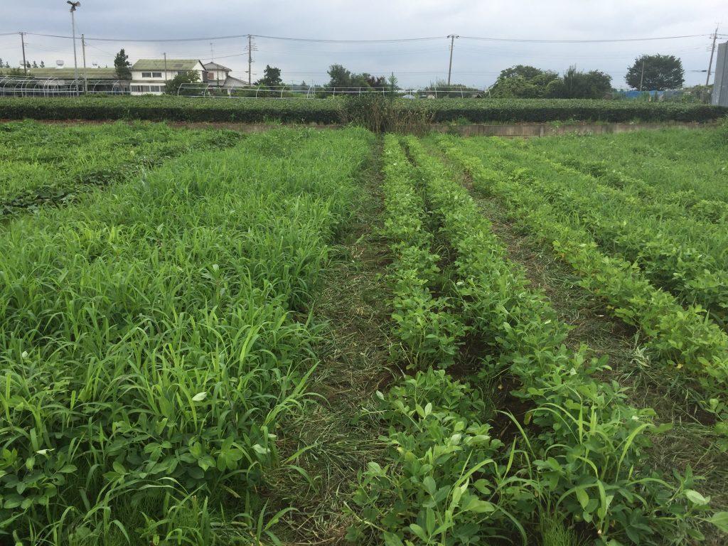 2016:7:26 井垣農園1