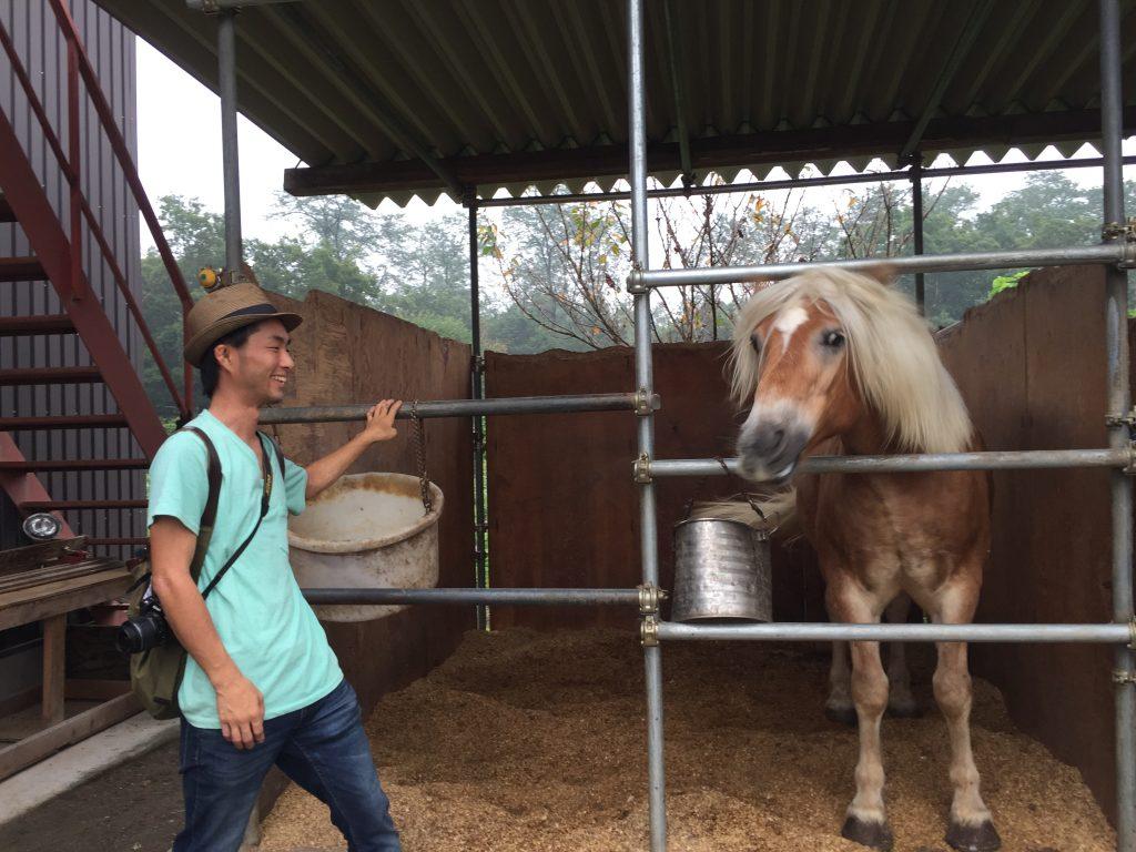 佐島牧場 馬