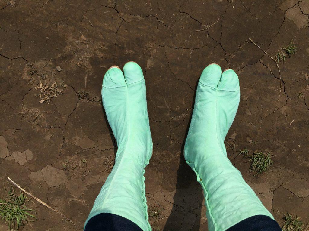 染色した足袋